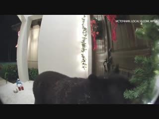 В США медведь позвонил в дверь и ушёл