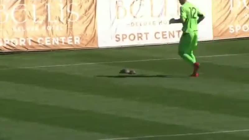 Украинский вратарь перетащил черепашек за пределы поля