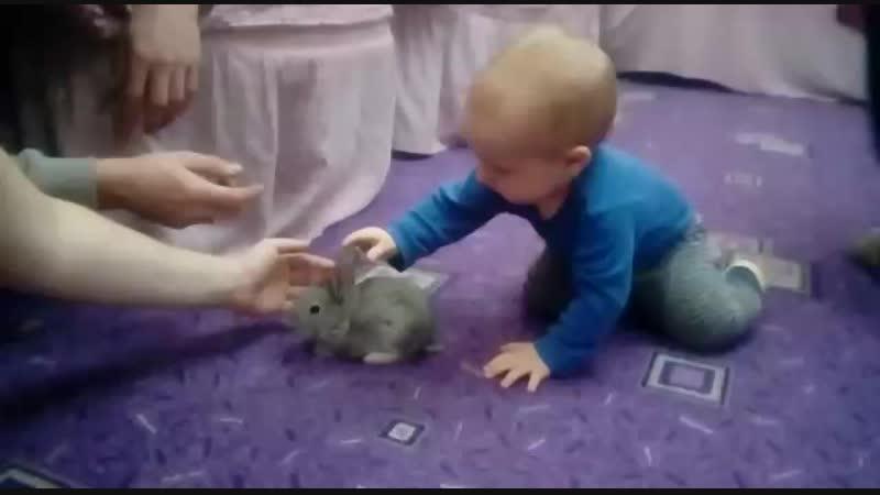 Внучек Мирончик и кролик .Знакомство.октябрь 2018г