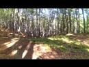 Я уже пол дня иду по этому Буковому лесу.