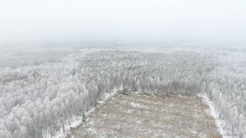 У лесозаготовителей Костромской области начинается «горячая» пора