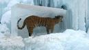 Топ 10 Шокирующих Животных Замерших Во Льду ч 2