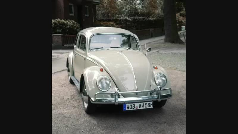 Beetle.mp4