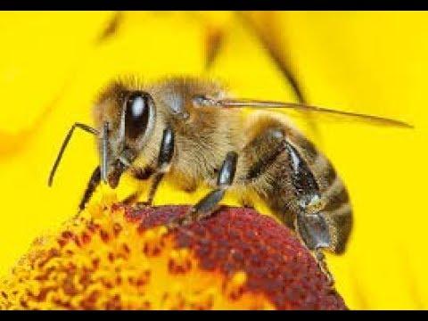 وثائقي جميل عن حياة النحل و صراعه للبقاء ج 158