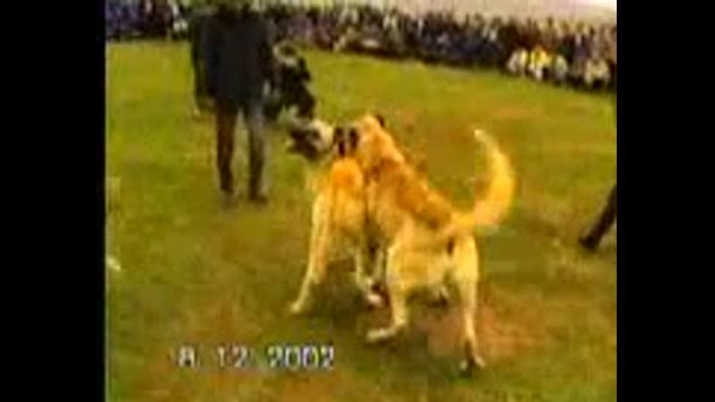 Legend Baba Corc vs Hasat 2002 fight