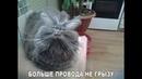 ПОПРОБУЙ НЕ ЗАСМЕЯТЬСЯ - Смешные Приколы с Животными до слез, смешные коты, funny cats 112