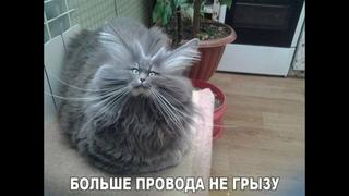 ПОПРОБУЙ НЕ ЗАСМЕЯТЬСЯ - Смешные Приколы с Животными до слез, смешные коты, funny cats #112