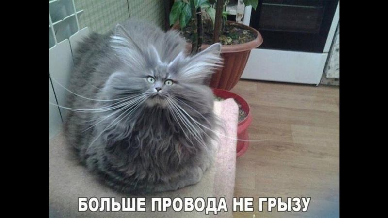 ПОПРОБУЙ НЕ ЗАСМЕЯТЬСЯ Смешные Приколы с Животными до слез смешные коты funny cats 112