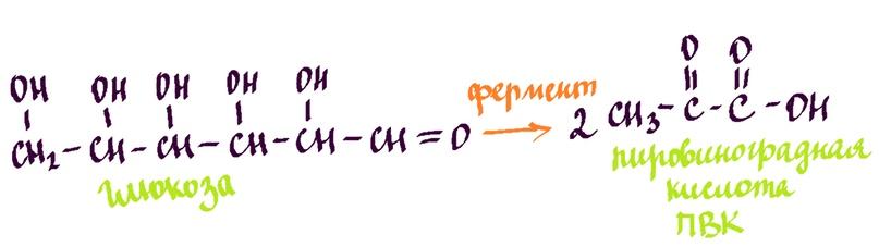 РАспад молекулы глюкозы на две пировиноградных кислоты