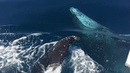 Beautiful conditions and inquisitive whales