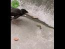 Птенец шокирован