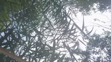 Mavic врезался в дерево. Как разбить дрон