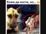 Чудесное спасение и изменение, вот что с собакой делает любовь, ласка, забота, внимание и добрый человек рядом! 😘