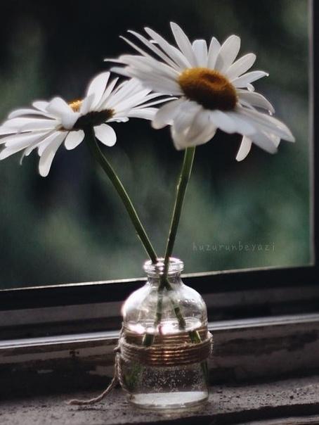 Фото №456334378 со страницы Светланы Густилевой