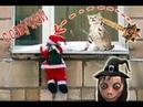 Приколы с котами с ОЗВУЧКОЙ – НОВЫЙ ГОД ОТМЕНЯЕТСЯ Самое смешное видео 2018 - DOMI SHOW