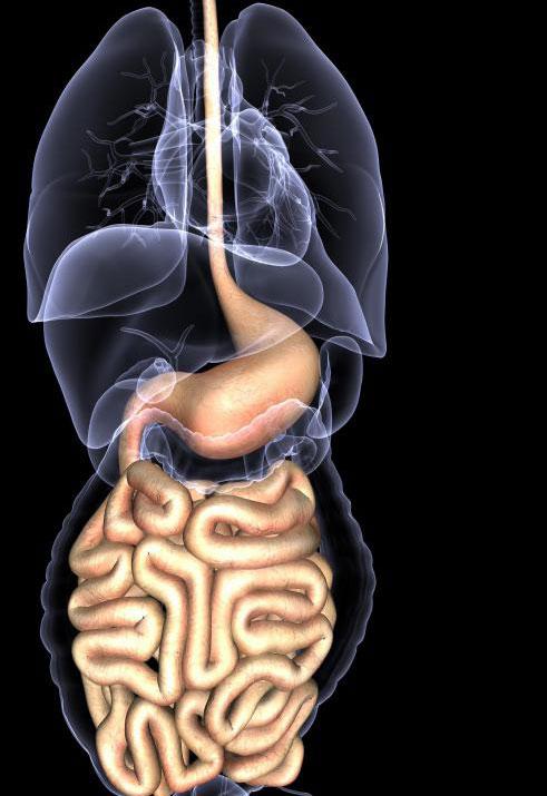 Эзофагэктомия удаляет раковые части пищевода в дополнение к раку в соседних лимфатических узлах, в то время как эзофагогастрэктомия удаляет лимфатические узлы, верхнюю часть желудка и раковые участки пищевода.