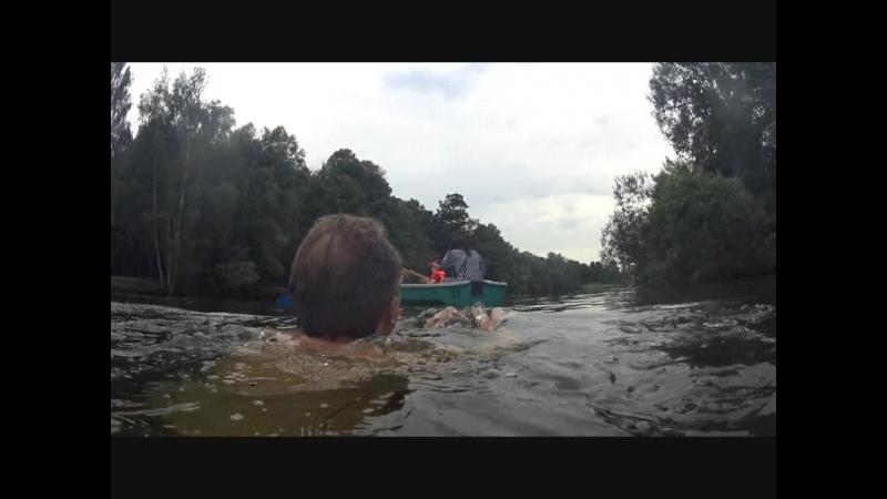Плавание в прудах Кузминского лесопарка.