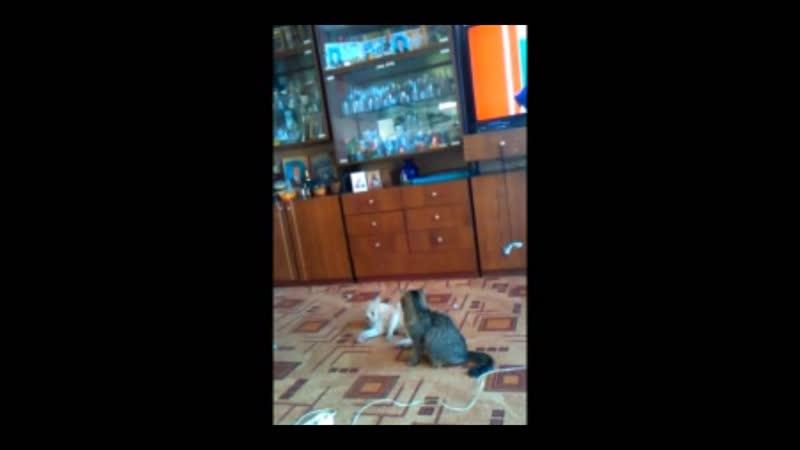 Catfight (O_O)