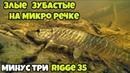Искал голавля на микро речке а нашел зубастых Архангельская область июль 2018