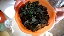 ферментированный чай из листьев малины