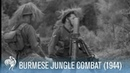 Dramatic War Footage of Sniper in Burmese Jungle 1944 War Archives
