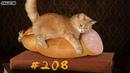 Смешные коты и котики, приколы про котов до слез под музыку – Смешные кошки 2018 – Funny Cats