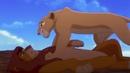 48 Король лев: Папа