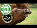 SKE 140. Stop halal ja kosher!