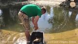 Львица Лейла поймала золотую рыбку! Тайган. Крым. Lioness Leila caught a goldfish!