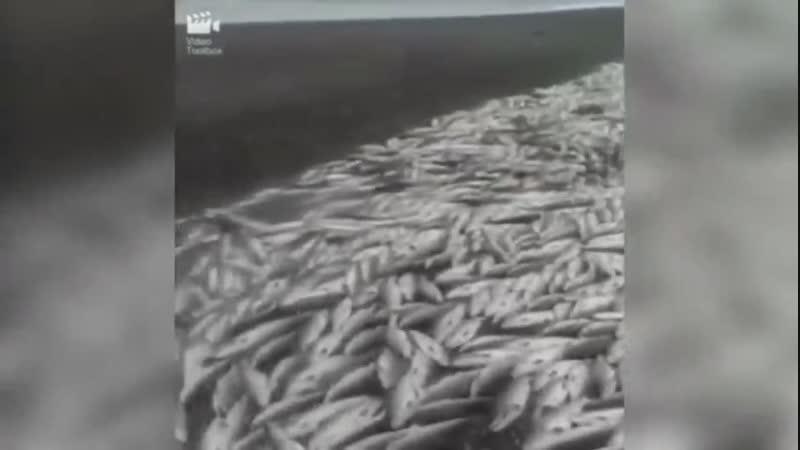 На Камчатке уничтожают лишнюю рыбу, чтобы не снижать цену. Новости сверхдержавы