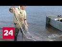 Новый закон о рыбалке сети запрещены, но только не на Дальнем Востоке и в Сибири - Россия 24