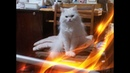 Смешное про кошек Позитив Создай себе хорошее настроение