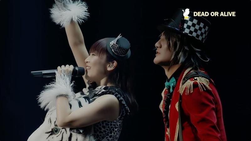 Angela「DEAD OR ALIVE」 angelaのミュージック・ワンダー★特大サーカスin日本武道館