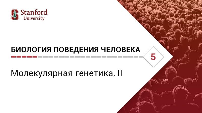 Биология поведения человека: Лекция 5. Молекулярная генетика, II [Роберт Сапольски, 2010. Стэнфорд]