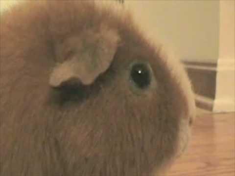 Dramatic Chipmunk Hey - Parry Gripp