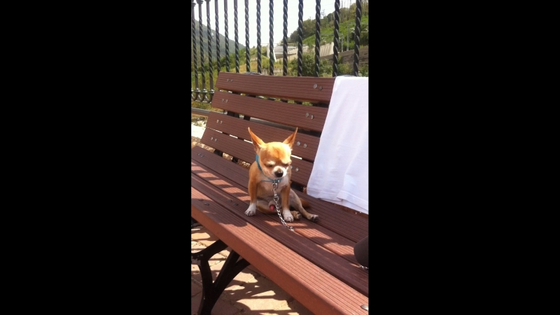 Маленькая возбудившаяся собачка, милота и няшность