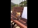Маленькая возбудившаяся собачка милота и няшность