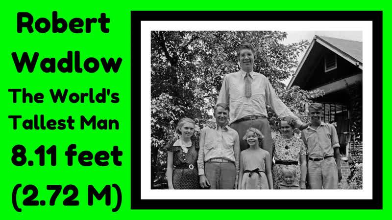 Robert Wadlow The Worlds Tallest Man 8.11 feet (Ripleys at Grandprairie, Tx)