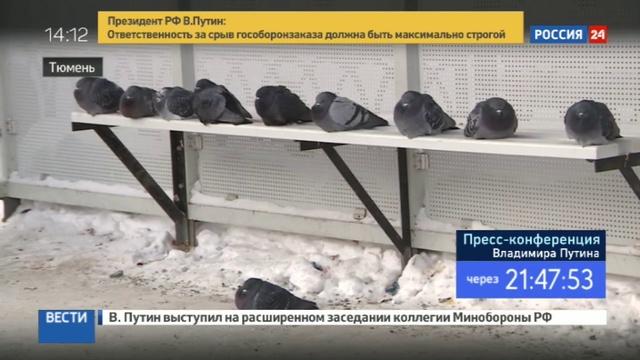 Новости на Россия 24 • Мороз шагает по России: регионы испытывают аномальной температурой