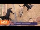 МВД сократило список потенциально опасных пород собак - Москва 24