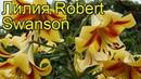 Лилия Robert Swanson. Краткий обзор Лилия описание характеристик, где купить луковицы