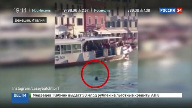 Новости на Россия 24 • В Венеции под смех зрителей утонул беженец из Африки