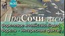 Форелевое хозяйство Сочи Адлер ➤ видео ➤экскурсия ✔цветная форель ✔beluga Sochi ПроСОЧИлись