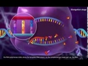 Molecular Biology of the Gene Chromosomes, DNA Structure 3D Animation YouTube YouTube