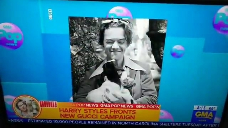 VIDEO Harrys campaign with Gucci on Good Morning America recently ! - -