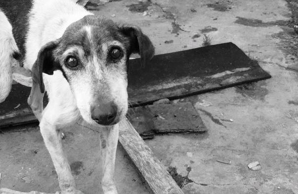 «Еще одна сторона чернобыльской катастрофы»: как сейчас живут бездомные собаки в зоне отчуждения