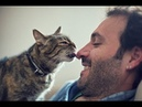Cute Cat and owners are the best friend compilation - Cats not angry at anything