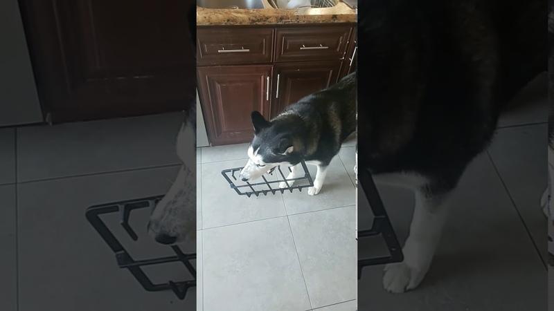 Пёсик попался на краже печенек