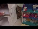 Моя кошка Клёпа помогает играть в lps