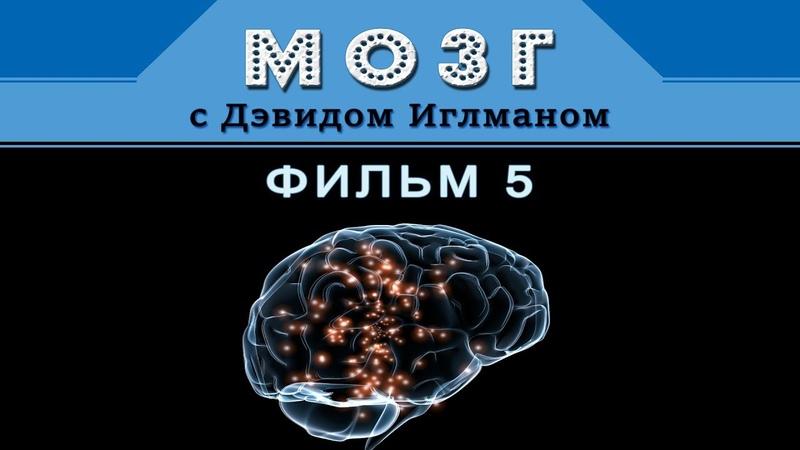 Мозг с Дэвидом Иглманом | Зачем мне нужен ты? | Фильм 5 || HD 720p vjpu c l'dbljv bukvfyjv | pfxtv vyt ye;ty ns? | abkmv 5 || hd